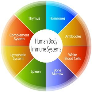 Our Hormones and Immune System
